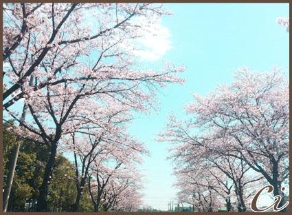 桜なみきのコピー