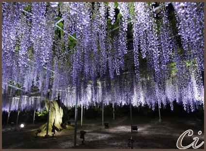 紫のコピー