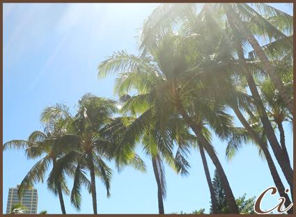 ハワイのコピー